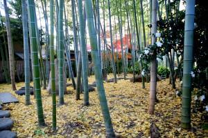いのちの小径/青竹の精気に満ちた空間
