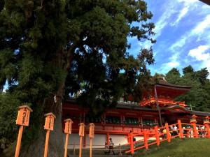 直会殿から臨むご本殿と御神木の大杉